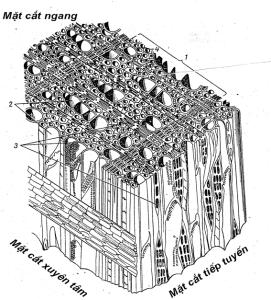 Hình 2