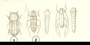 Hình 6