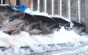 Chế biến Hải sản_Bài 5 Kỹ thuật của quá trình lạnh đông.