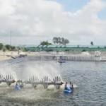 Chế biến Hải sản_Bài 1 Thành phần hóa học và tính chất của động vật thủy sản