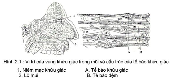 qdanh-gia-chat-luong-thuc-pham-2