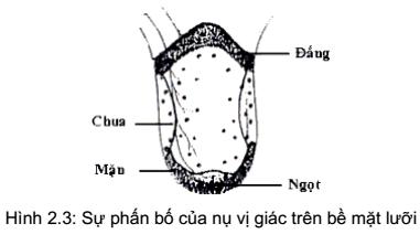 qdanh-gia-chat-luong-thuc-pham-4