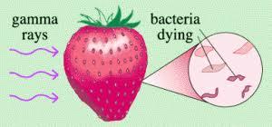 Bảo quản thực phẩm_Bài 6: Bảo quản thực phẩm bằng tia phóng xạ