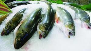 Chế biến Hải sản_Bài 3 Các biến đổi của động vật thuỷ sản sau khi chết (Biến đổi do vi sinh vật)